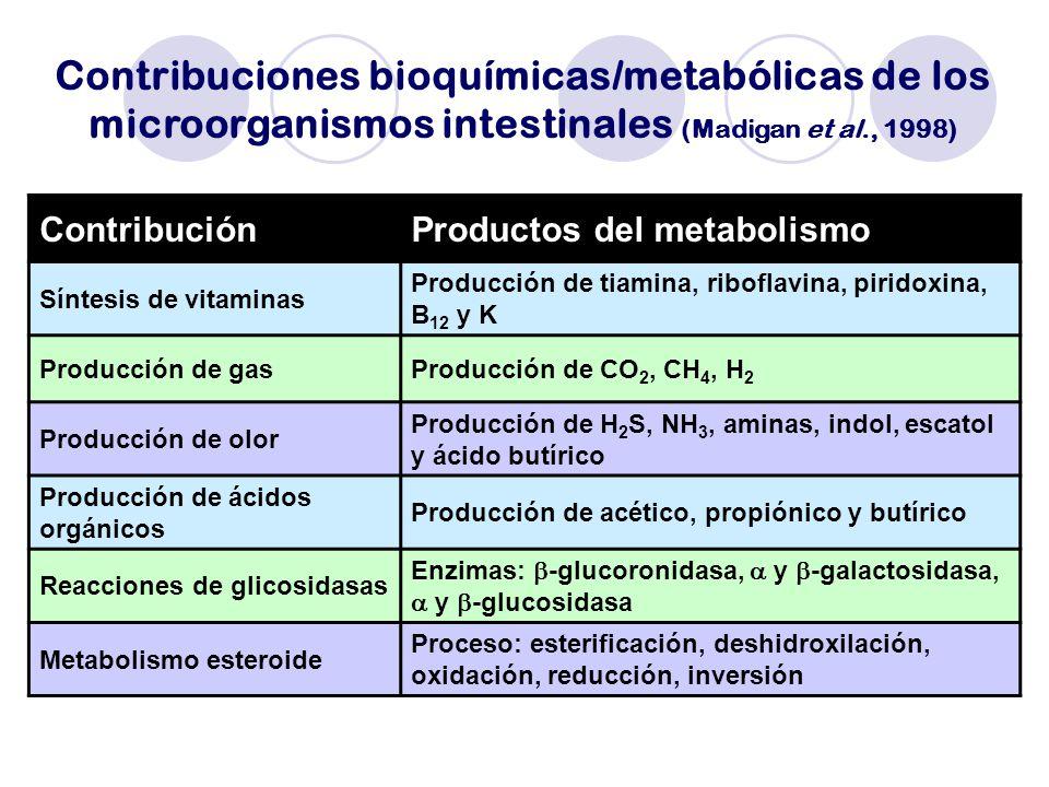 Contribuciones bioquímicas/metabólicas de los microorganismos intestinales (Madigan et al., 1998)