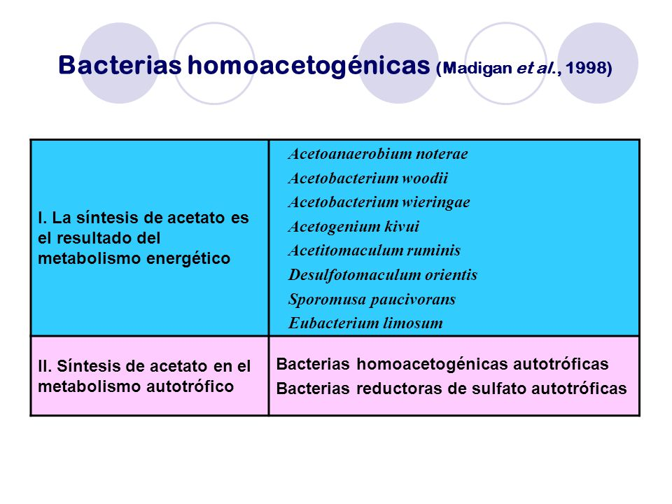 Bacterias homoacetogénicas (Madigan et al., 1998)