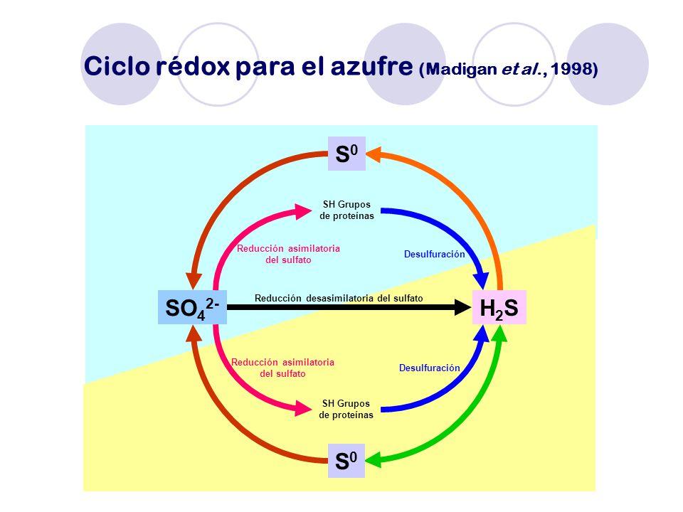 Ciclo rédox para el azufre (Madigan et al., 1998)