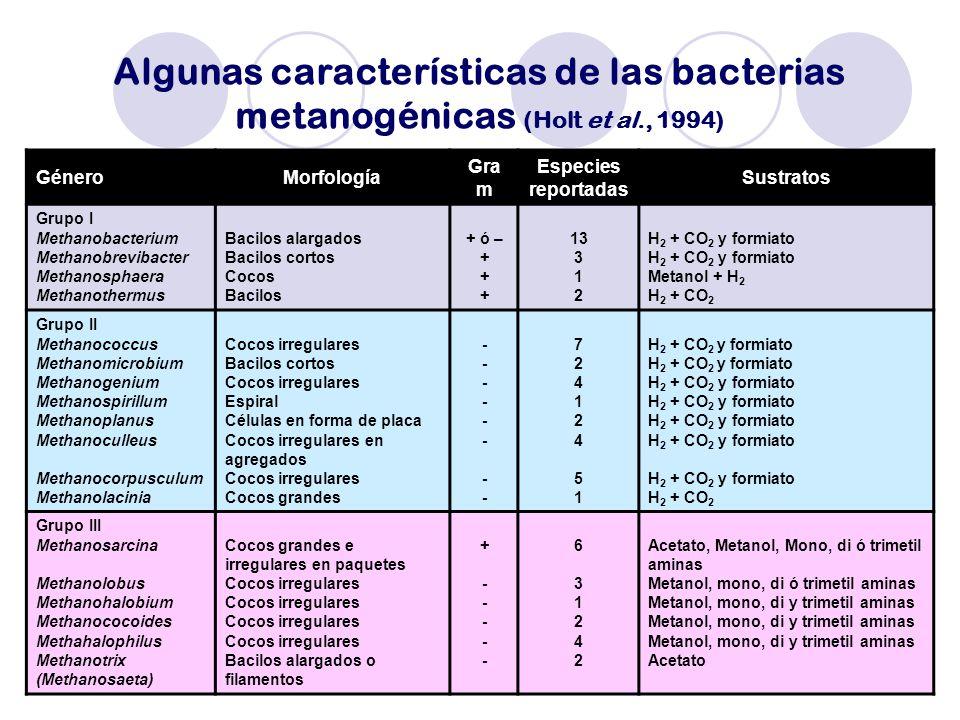 Algunas características de las bacterias metanogénicas (Holt et al