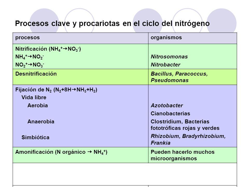 Procesos clave y procariotas en el ciclo del nitrógeno