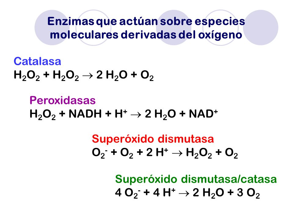 Enzimas que actúan sobre especies moleculares derivadas del oxígeno