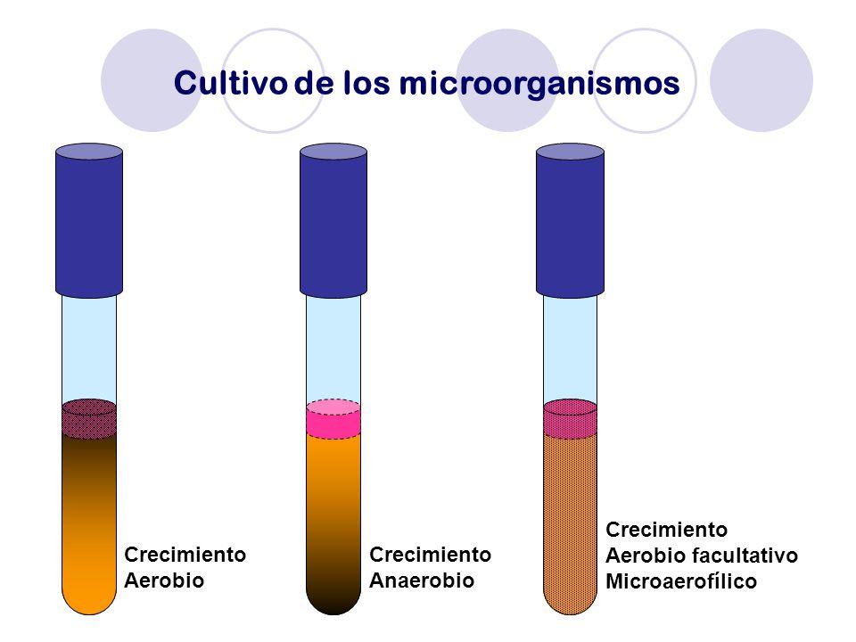 Cultivo de los microorganismos