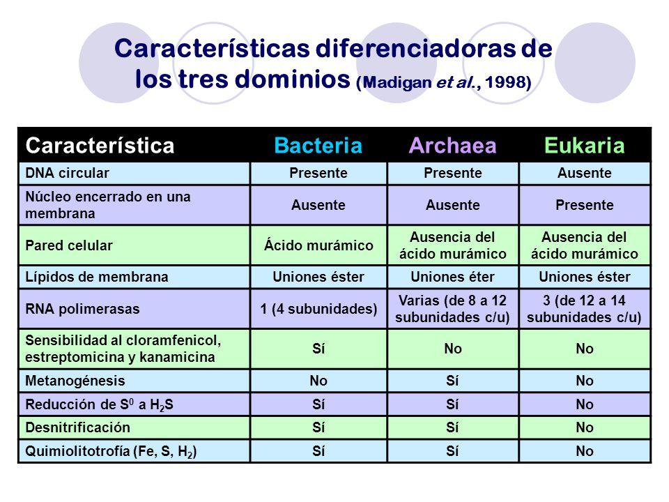Características diferenciadoras de