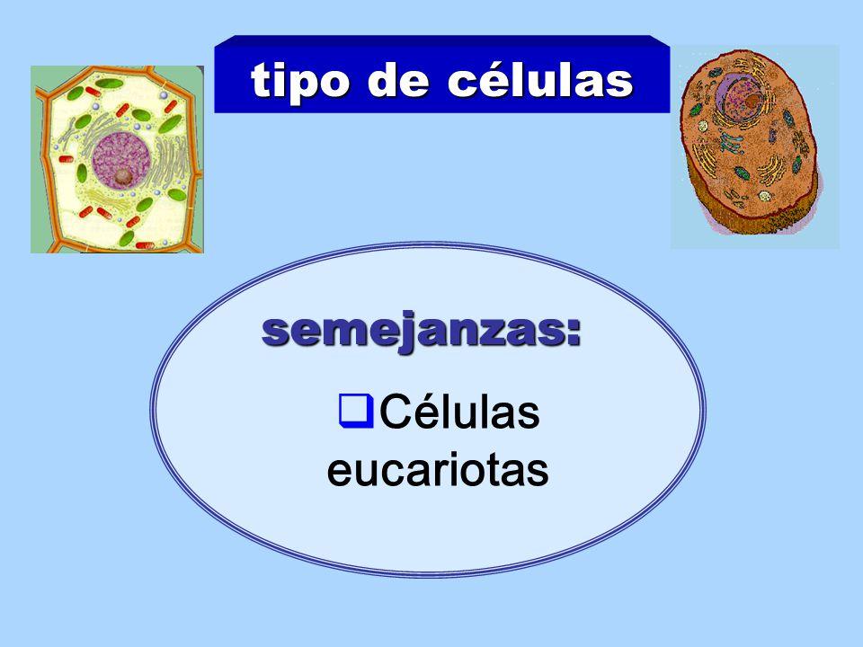 tipo de células semejanzas: Células eucariotas