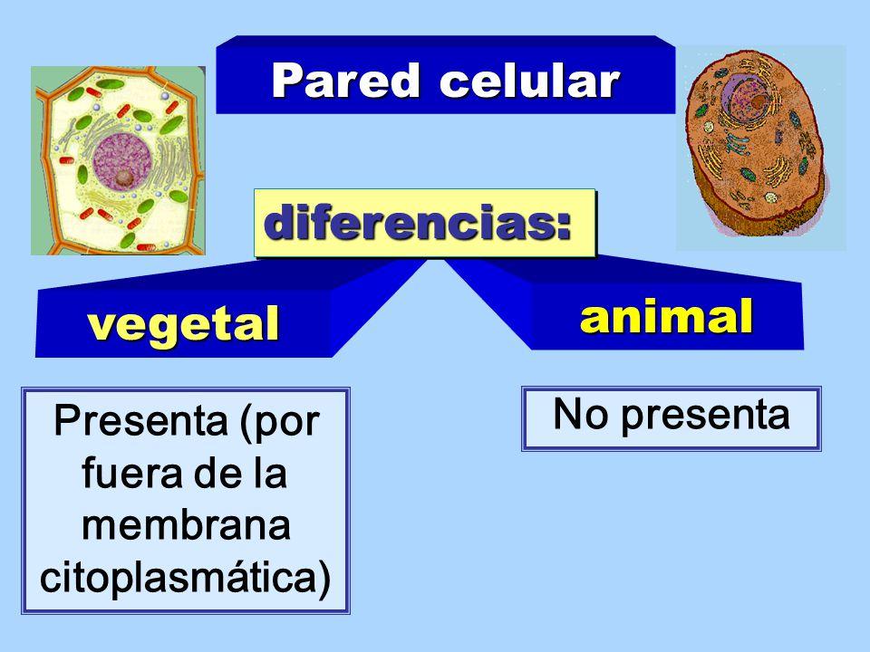 Presenta (por fuera de la membrana citoplasmática)