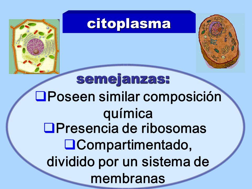 Poseen similar composición química