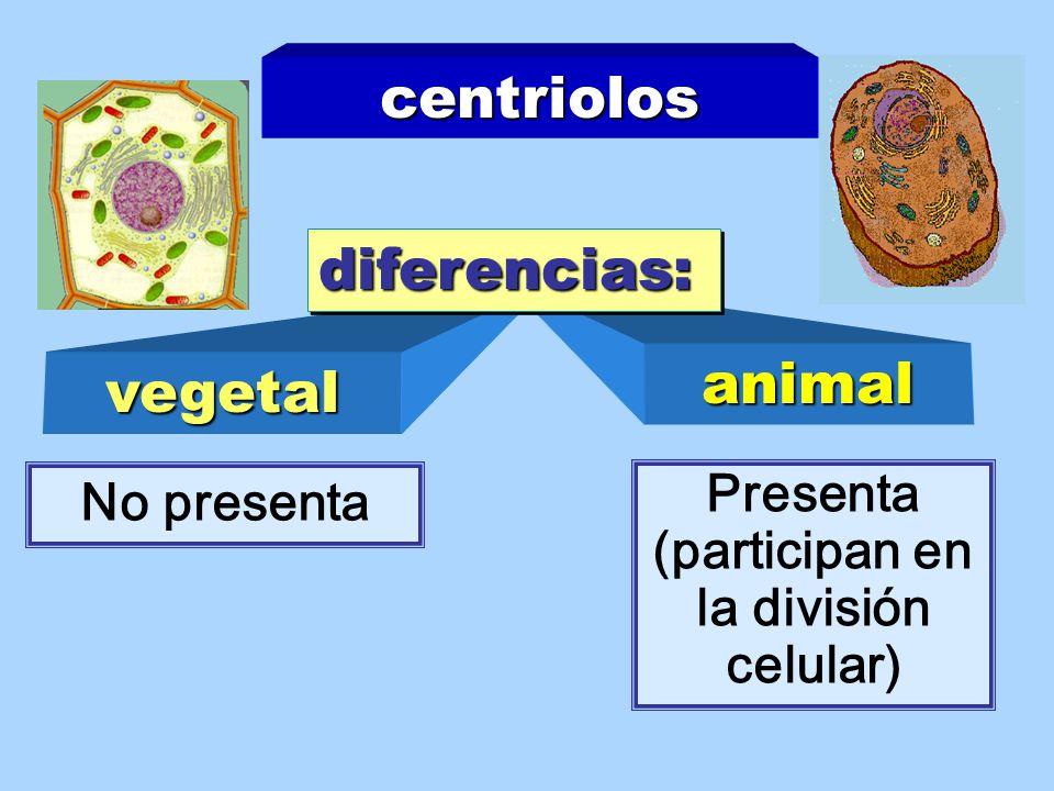 Presenta (participan en la división celular)