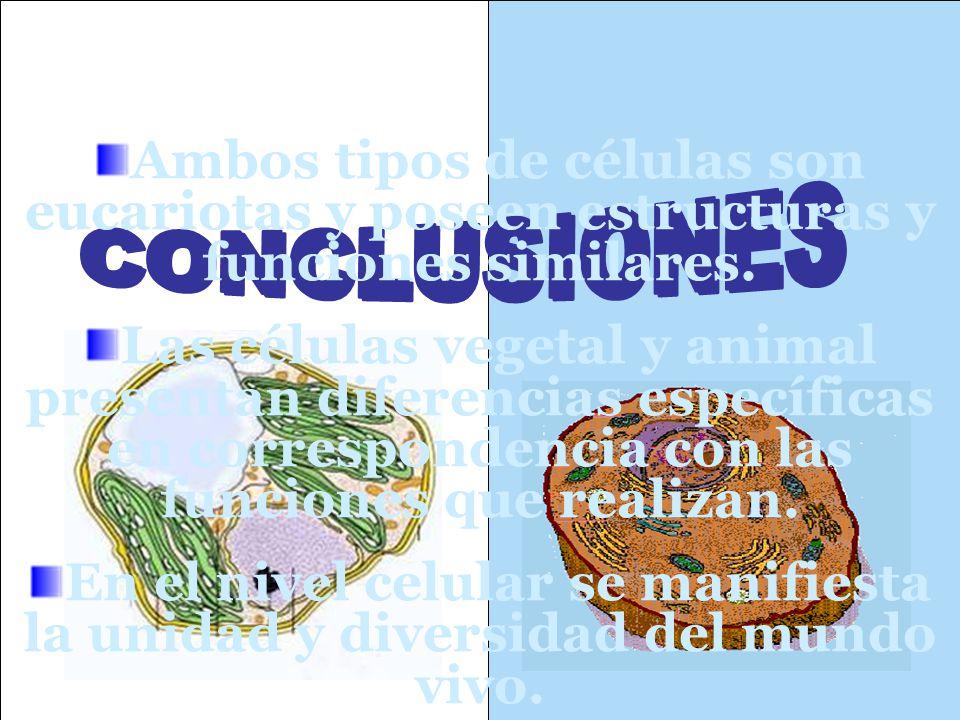 Ambos tipos de células son eucariotas y poseen estructuras y funciones similares.