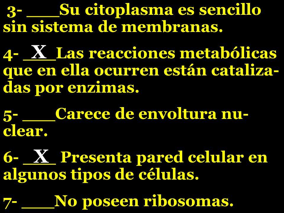 X X 3- ___Su citoplasma es sencillo sin sistema de membranas.