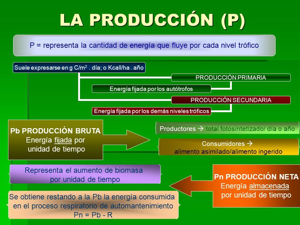 LA PRODUCCIÓN (P) P = representa la cantidad de energía que fluye por cada nivel trófico. Pb PRODUCCIÓN BRUTA.