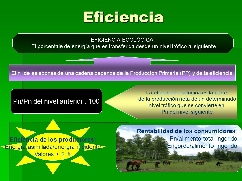 Eficiencia de los productores: