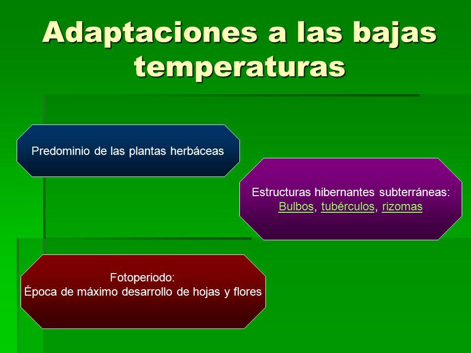 Adaptaciones a las bajas temperaturas