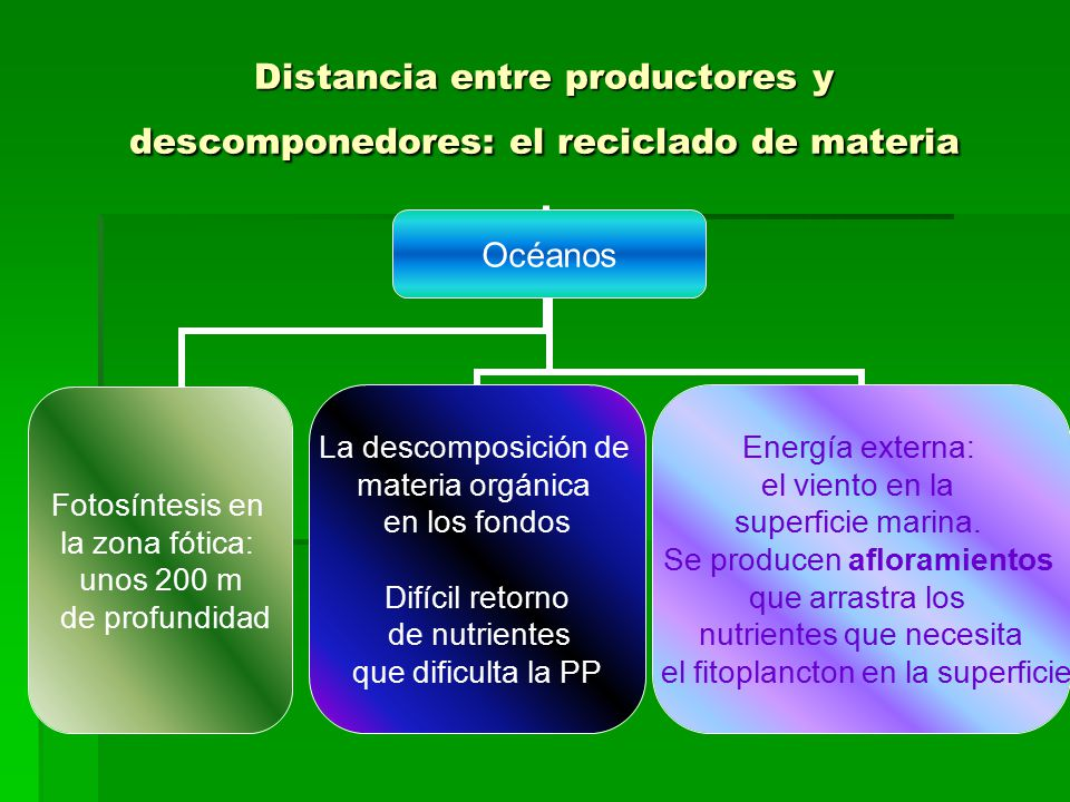 Distancia entre productores y descomponedores: el reciclado de materia