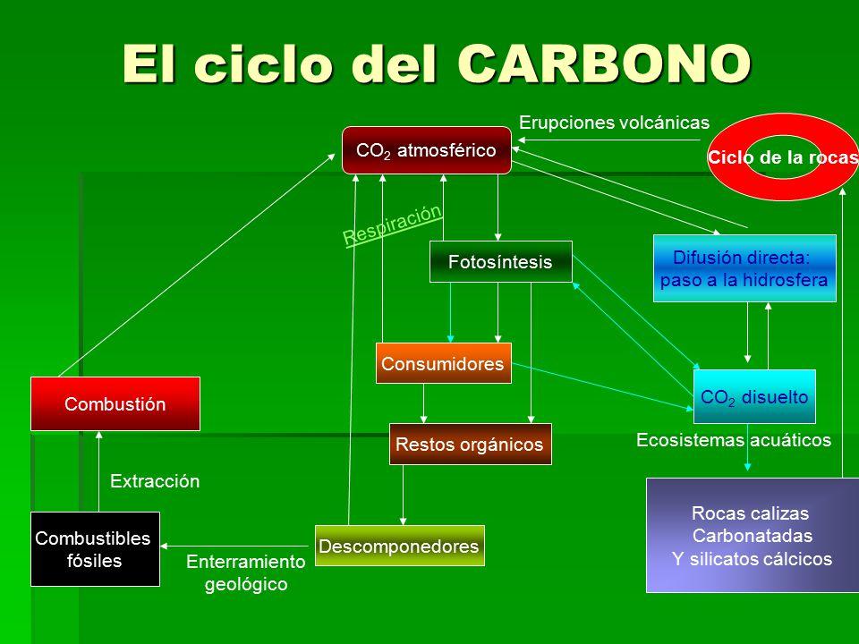 El ciclo del CARBONO Erupciones volcánicas Ciclo de la rocas