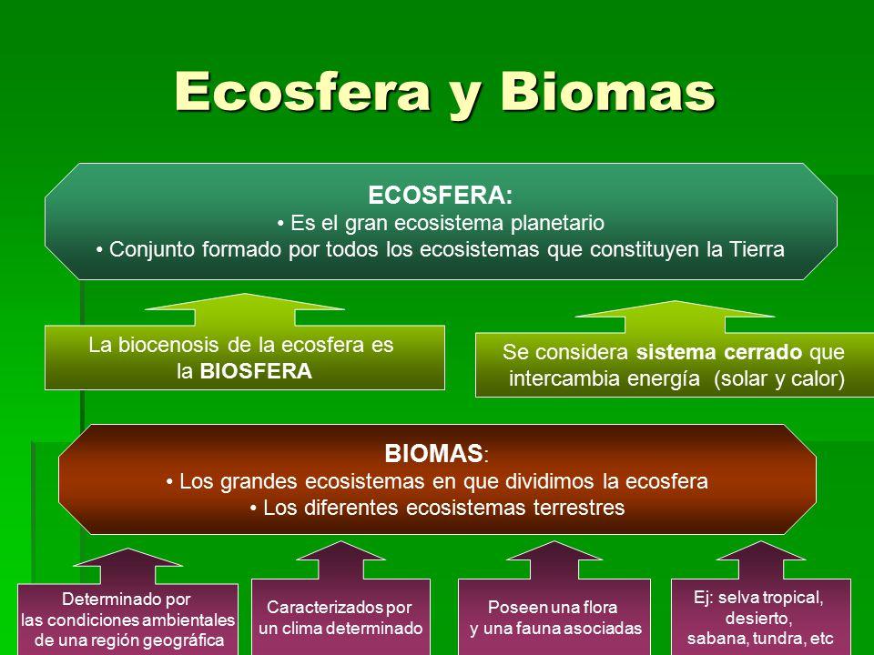 Ecosfera y Biomas ECOSFERA: BIOMAS: Es el gran ecosistema planetario