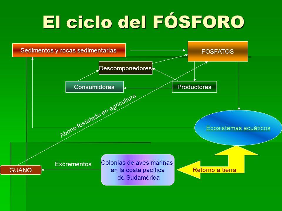 El ciclo del FÓSFORO FOSFATOS Sedimentos y rocas sedimentarias