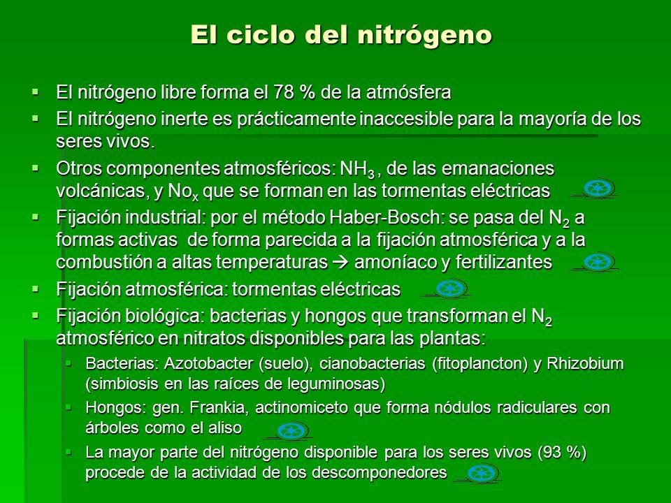 El ciclo del nitrógeno El nitrógeno libre forma el 78 % de la atmósfera.