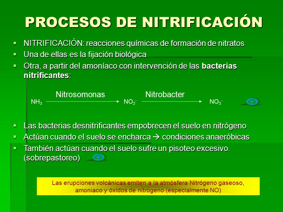 PROCESOS DE NITRIFICACIÓN