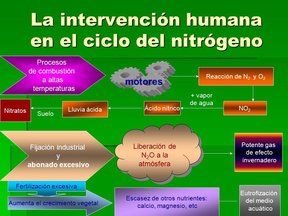 La intervención humana en el ciclo del nitrógeno