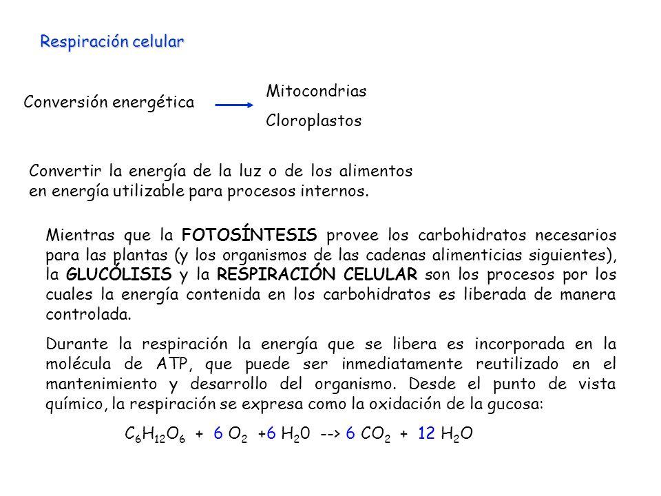 Respiración celular Conversión energética. Mitocondrias. Cloroplastos.