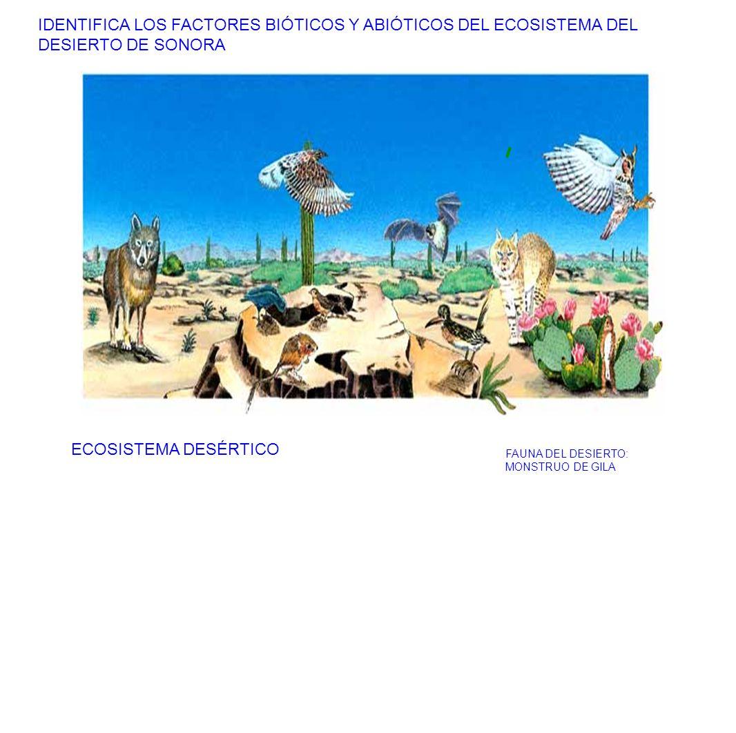 IDENTIFICA LOS FACTORES BIÓTICOS Y ABIÓTICOS DEL ECOSISTEMA DEL DESIERTO DE SONORA