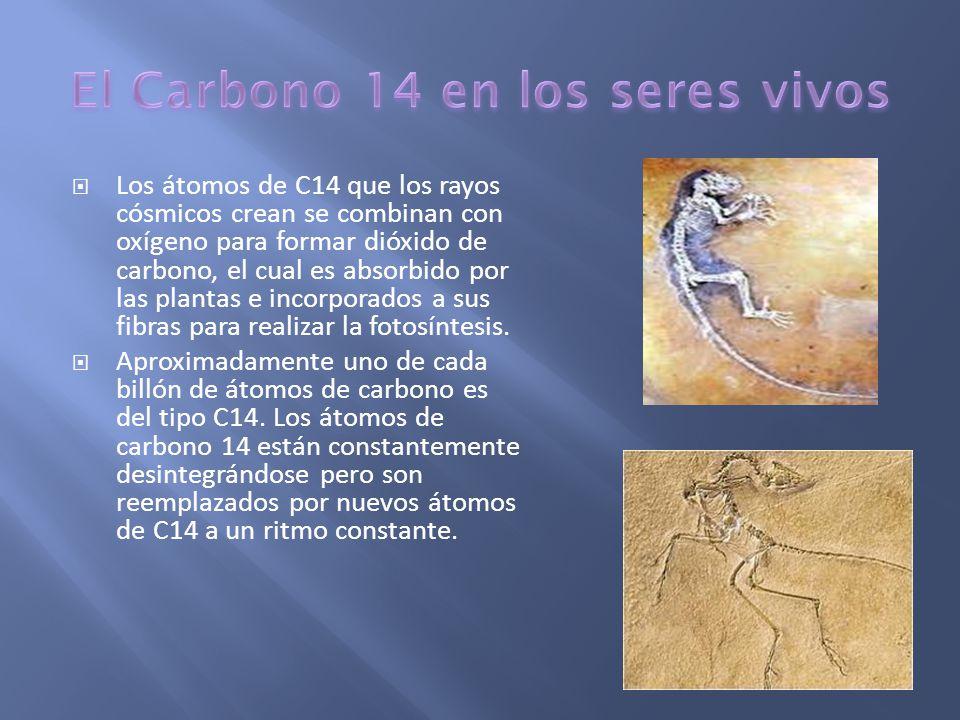 El Carbono 14 en los seres vivos