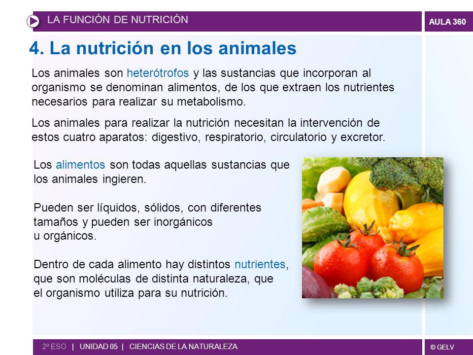 4. La nutrición en los animales