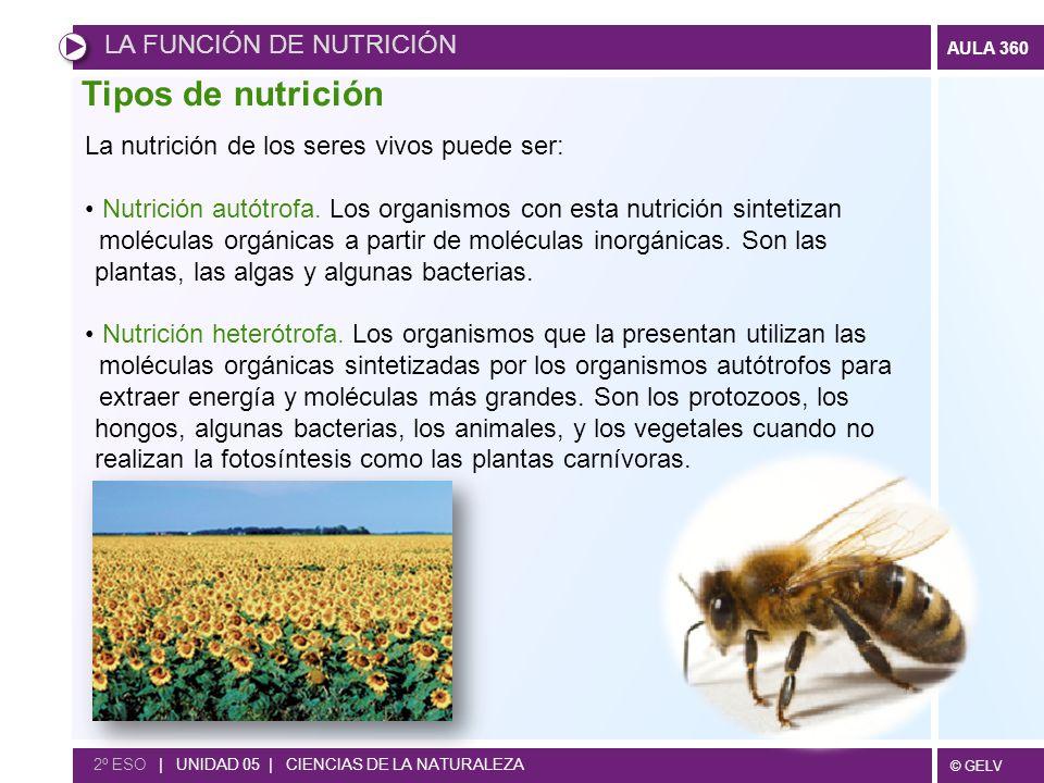 Tipos de nutrición LA FUNCIÓN DE NUTRICIÓN