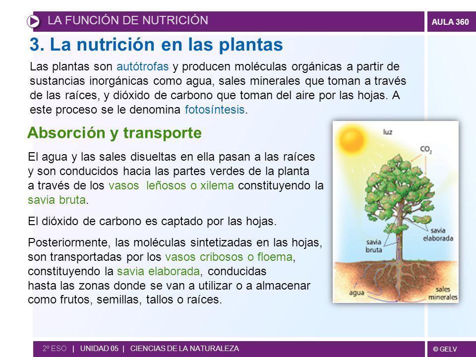 3. La nutrición en las plantas
