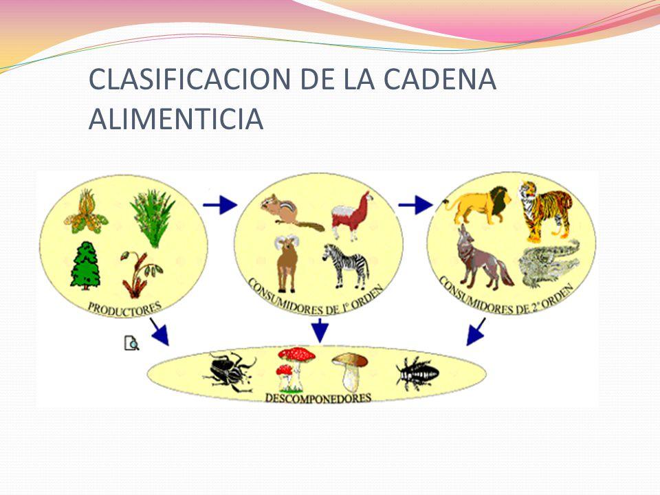 CLASIFICACION DE LA CADENA ALIMENTICIA