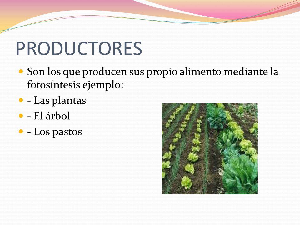 PRODUCTORES Son los que producen sus propio alimento mediante la fotosíntesis ejemplo: - Las plantas.
