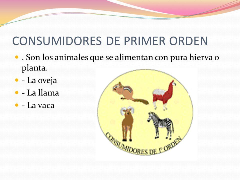 CONSUMIDORES DE PRIMER ORDEN