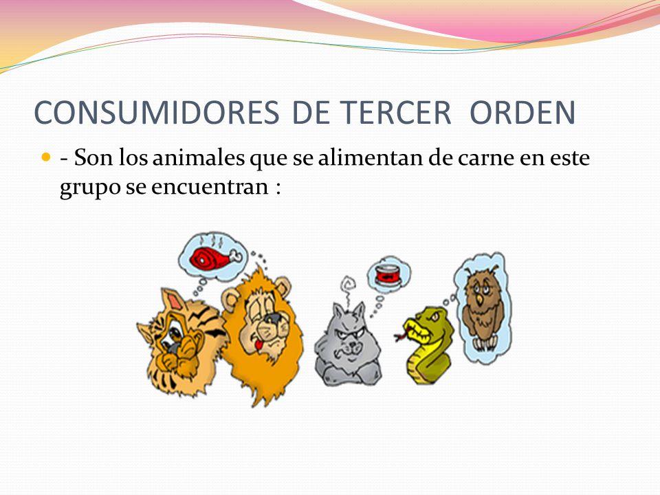 CONSUMIDORES DE TERCER ORDEN