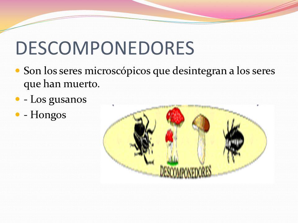 DESCOMPONEDORES Son los seres microscópicos que desintegran a los seres que han muerto. - Los gusanos.
