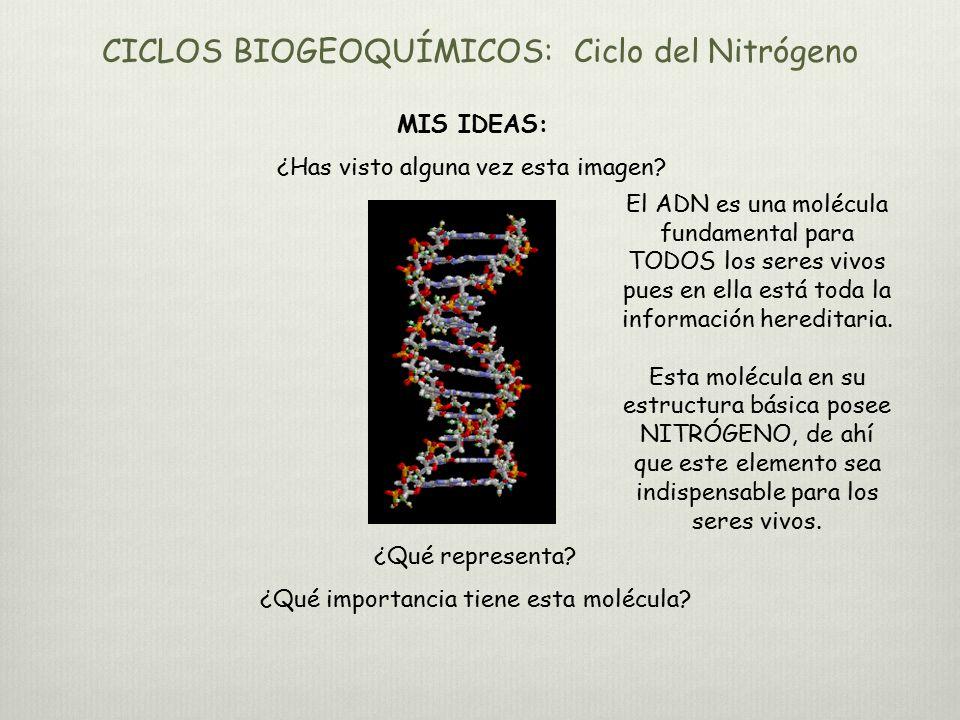 CICLOS BIOGEOQUÍMICOS: Ciclo del Nitrógeno