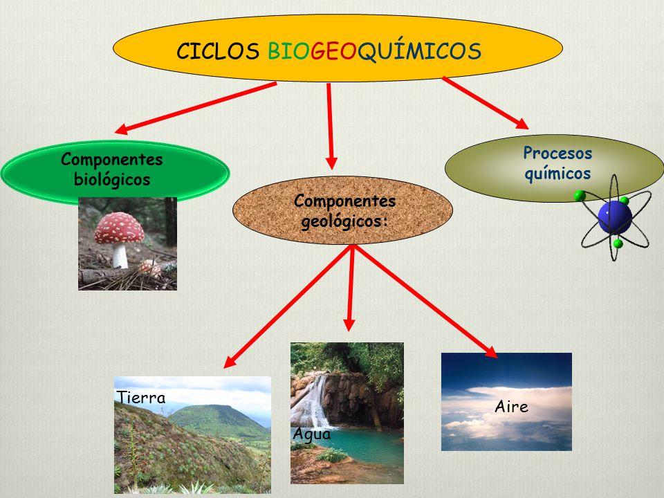 Componentes biológicos Componentes geológicos:
