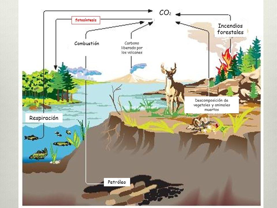 CO2 Incendios forestales Respiración Combustión Petróleo fotosíntesis