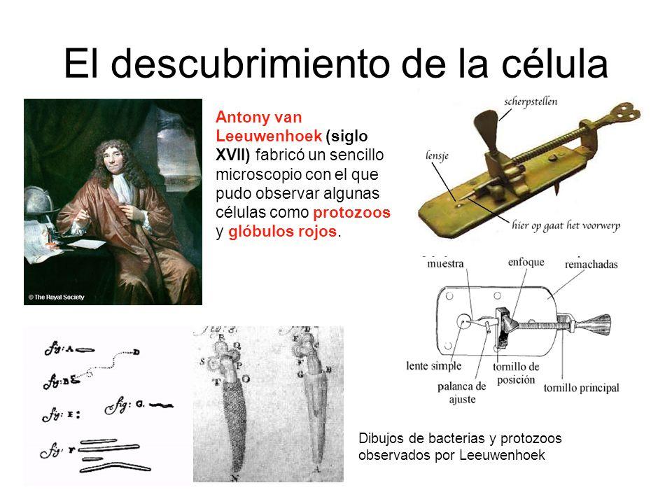 El descubrimiento de la célula