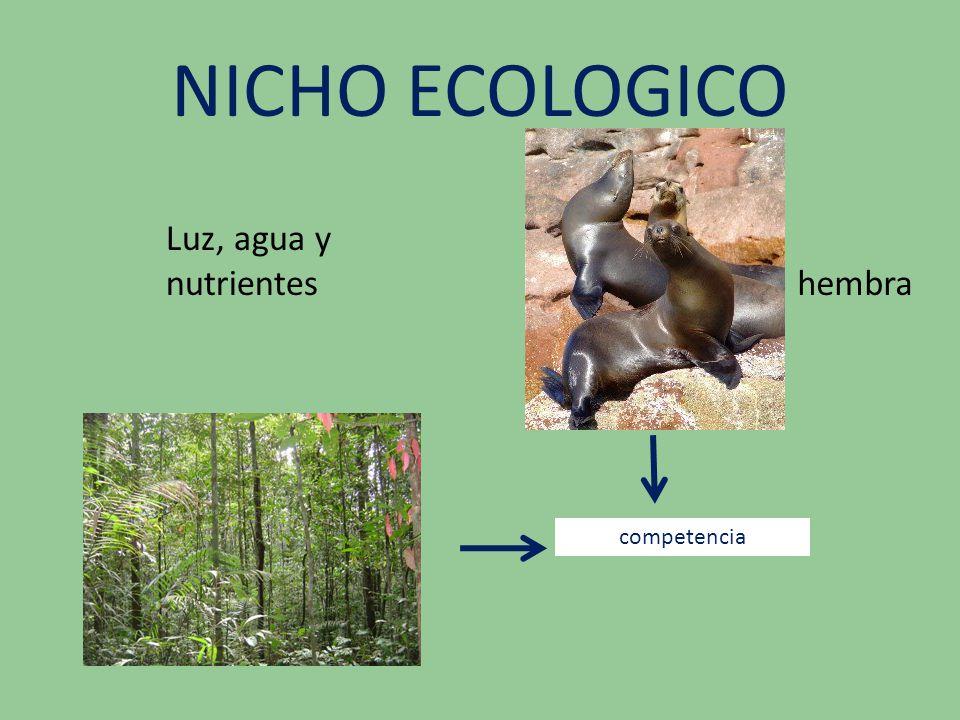 NICHO ECOLOGICO Luz, agua y nutrientes hembra competencia