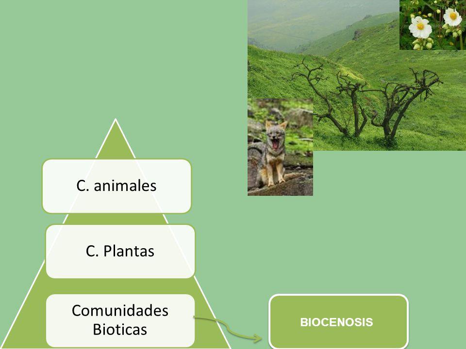 Comunidades Bioticas C. Plantas C. animales BIOCENOSIS