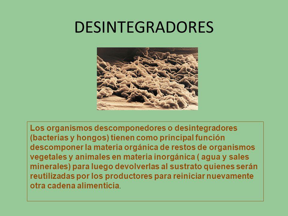 DESINTEGRADORES