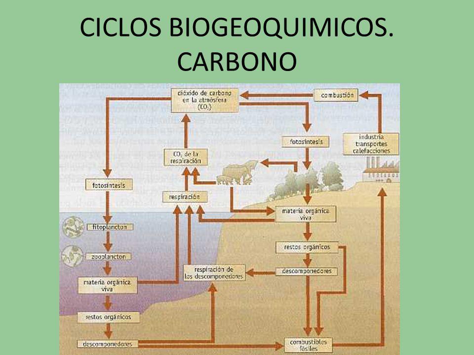 CICLOS BIOGEOQUIMICOS. CARBONO