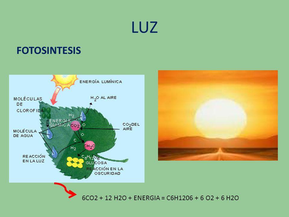 LUZ FOTOSINTESIS 6CO2 + 12 H2O + ENERGIA = C6H1206 + 6 O2 + 6 H2O