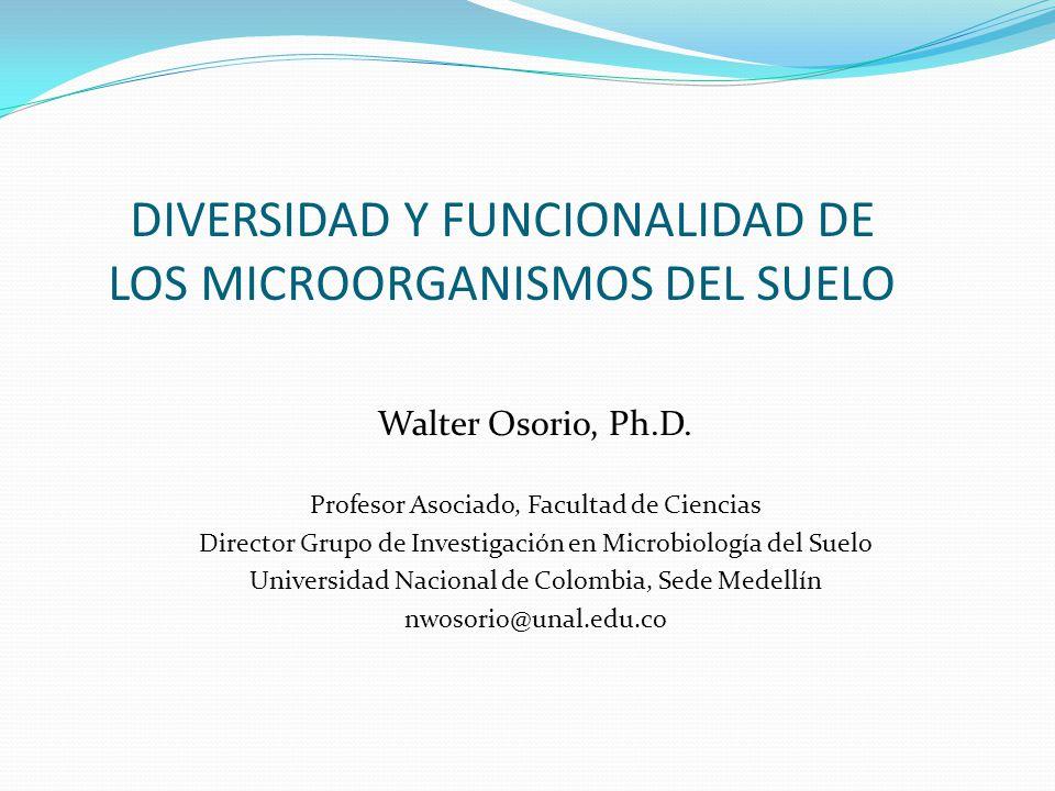 DIVERSIDAD Y FUNCIONALIDAD DE LOS MICROORGANISMOS DEL SUELO