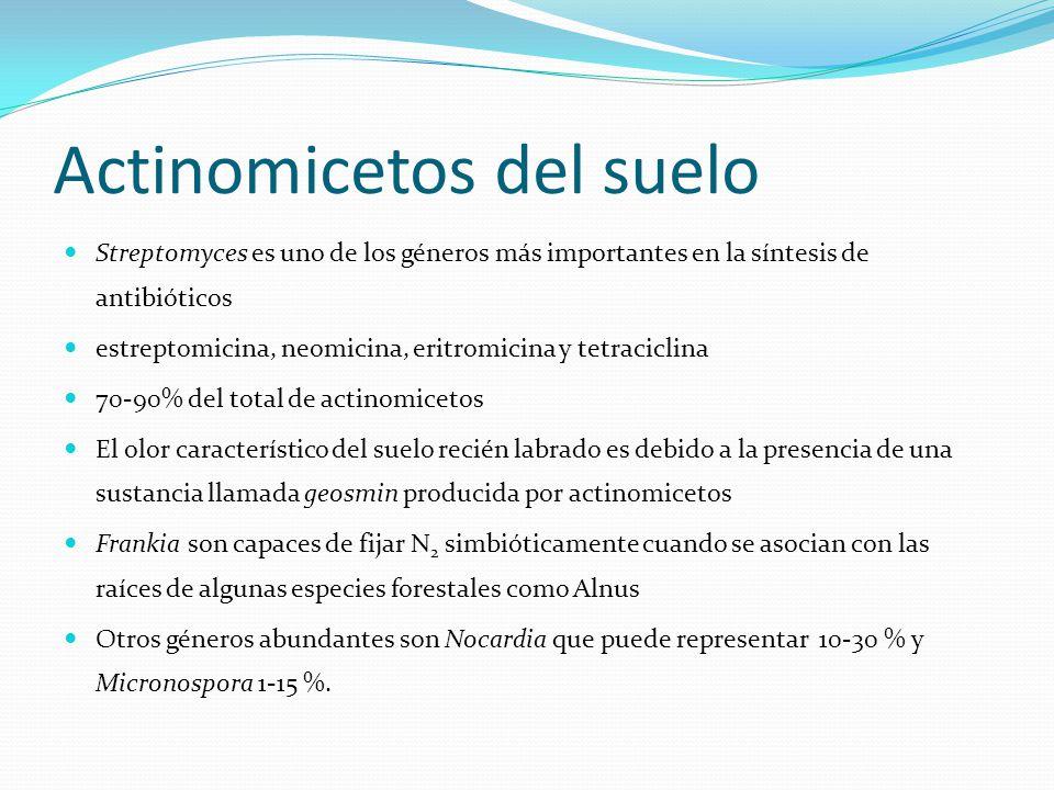 Actinomicetos del suelo