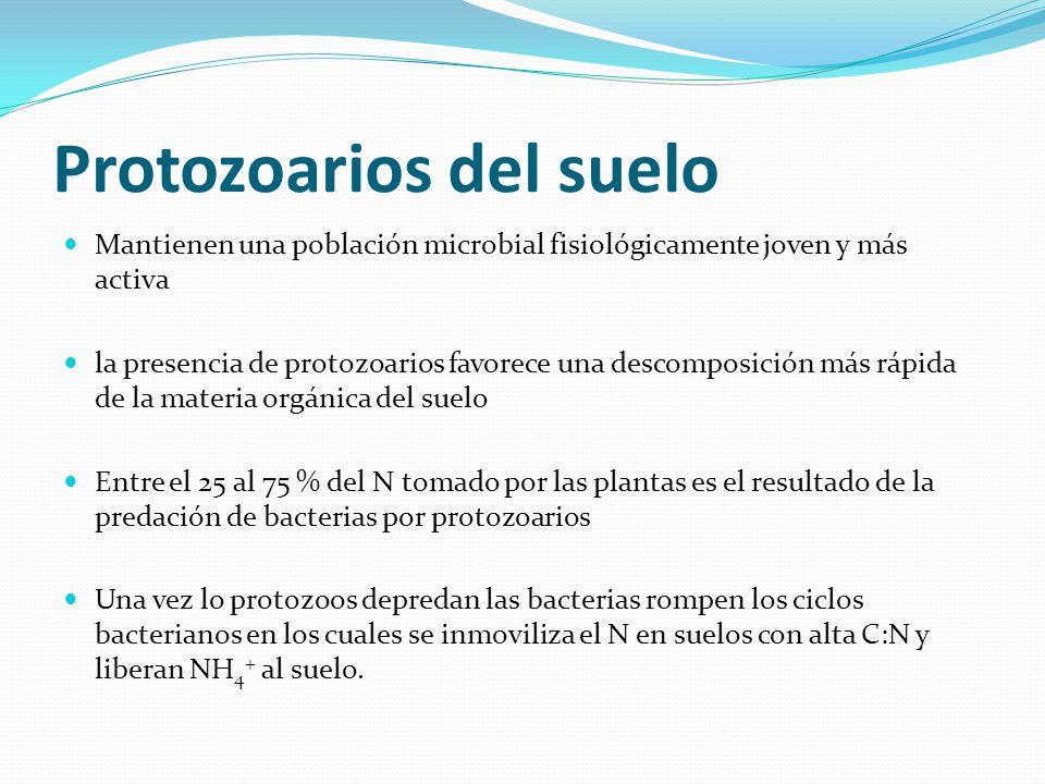 Protozoarios del suelo