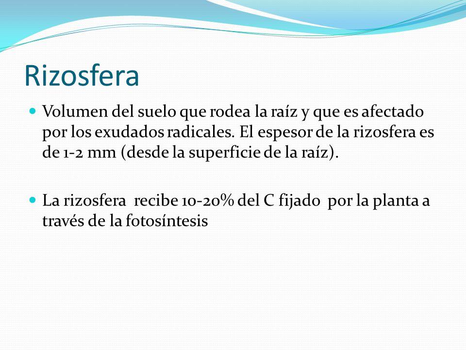 Rizosfera