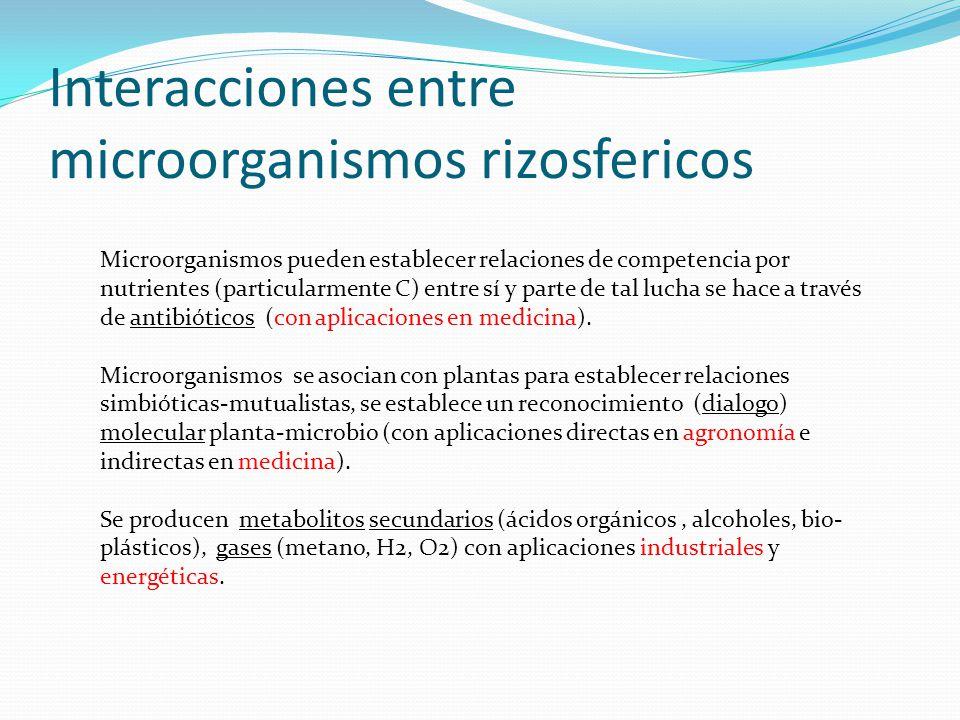Interacciones entre microorganismos rizosfericos