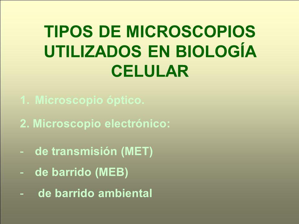 TIPOS DE MICROSCOPIOS UTILIZADOS EN BIOLOGÍA CELULAR